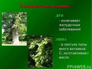 В парфюмерии, медицине: ДУБ - излечивает желудочные заболевания ЛИПА - в листьях