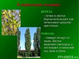 В парфюмерии, медицине: БЕРЕЗА - почки и листья березы используют как мочегонное