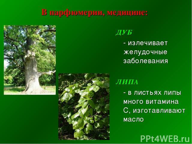 В парфюмерии, медицине: ДУБ - излечивает желудочные заболевания ЛИПА - в листьях липы много витамина С, изготавливают масло