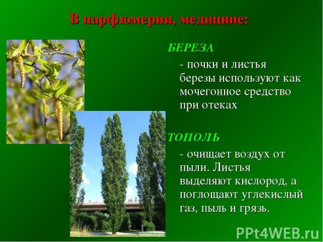 В парфюмерии, медицине: БЕРЕЗА - почки и листья березы используют как мочегонное средство при отеках ТОПОЛЬ - очищает воздух от пыли. Листья выделяют кислород, а поглощают углекислый газ, пыль и грязь.