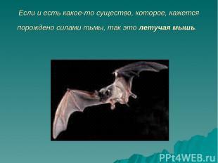 Если и есть какое-то существо, которое, кажется порождено силами тьмы, так это л