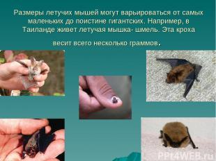 Размеры летучих мышей могут варьироваться от самых маленьких до поистине гигантс