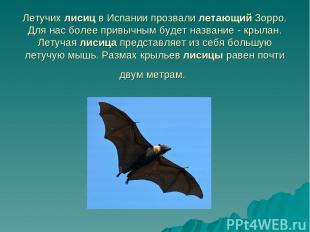 Летучих лисиц в Испании прозвали летающий Зорро. Для нас более привычным будет н