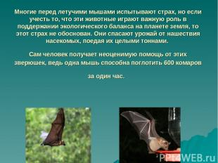 Многие перед летучими мышами испытывают страх, но если учесть то, что эти животн