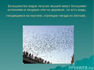 Большинство видов летучих мышей живут большими колониями в пещерах или на деревь