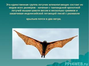 Эта единственная группа летучих млекопитающих состоит из видов всех размеров - н