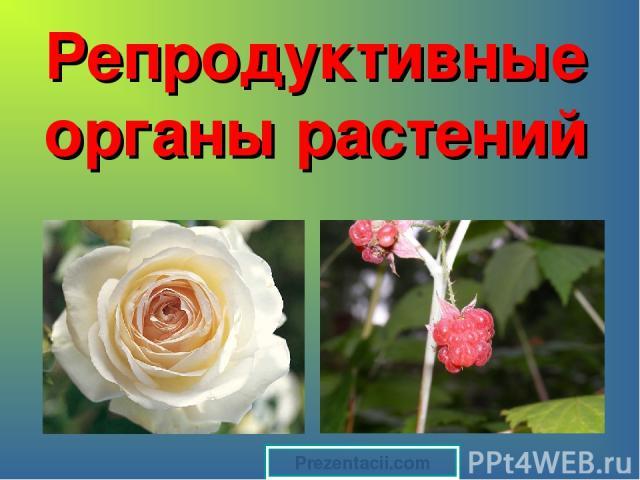 Репродуктивные органы растений Prezentacii.com