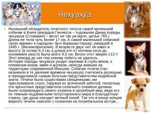 Чихуахуа Нынешний обладатель почетного титула самой маленькой собачки в Книге ре