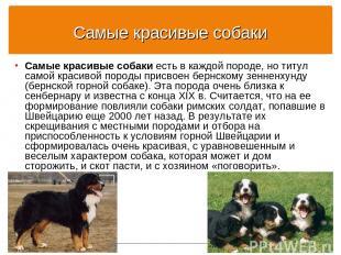 Самые красивые собаки Самые красивые собаки есть в каждой породе, но титул самой