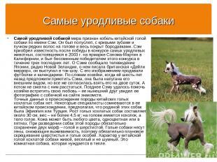 Самые уродливые собаки Самой уродливой собакой мира признан кобель китайской гол
