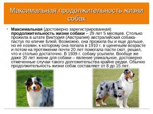 Максимальная продолжительность жизни собак Максимальная (достоверно зарегистриро