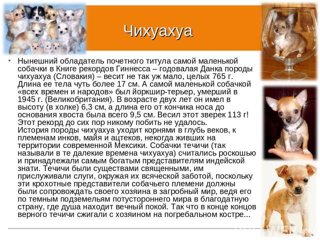 Чихуахуа Нынешний обладатель почетного титула самой маленькой собачки в Книге рекордов Гиннесса – годовалая Данка породы чихуахуа (Словакия) – весит не так уж мало, целых 765 г. Длина ее тела чуть более 17 см. А самой маленькой собачкой «всех времен…