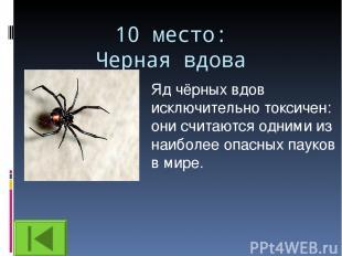 10 место: Черная вдова Яд чёрных вдов исключительно токсичен: они считаются одни
