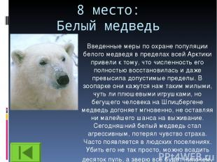8 место: Белый медведь Введенные меры по охране популяции белого медведя в преде