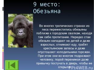 9 место: Обезьяна Во многих тропических странах из леса переместились обезьяны п