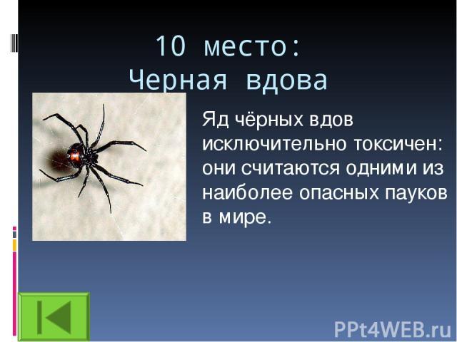 10 место: Черная вдова Яд чёрных вдов исключительно токсичен: они считаются одними из наиболее опасных пауков в мире.