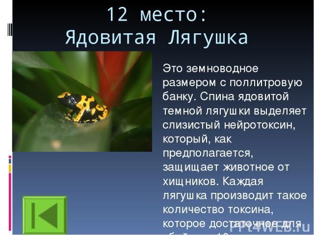 12 место: Ядовитая Лягушка Это земноводное размером с поллитровую банку. Спина ядовитой темной лягушки выделяет слизистый нейротоксин, который, как предполагается, защищает животное от хищников. Каждая лягушка производит такое количество токсина, ко…