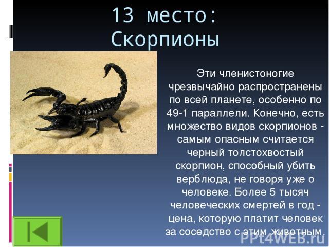 13 место: Скорпионы Эти членистоногие чрезвычайно распространены по всей планете, особенно по 49-1 параллели. Конечно, есть множество видов скорпионов - самым опасным считается черный толстохвостый скорпион, способный убить верблюда, не говоря уже о…
