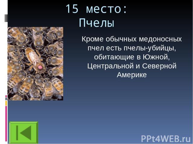 15 место: Пчелы Кроме обычных медоносных пчел есть пчелы-убийцы, обитающие в Южной, Центральной и Северной Америке