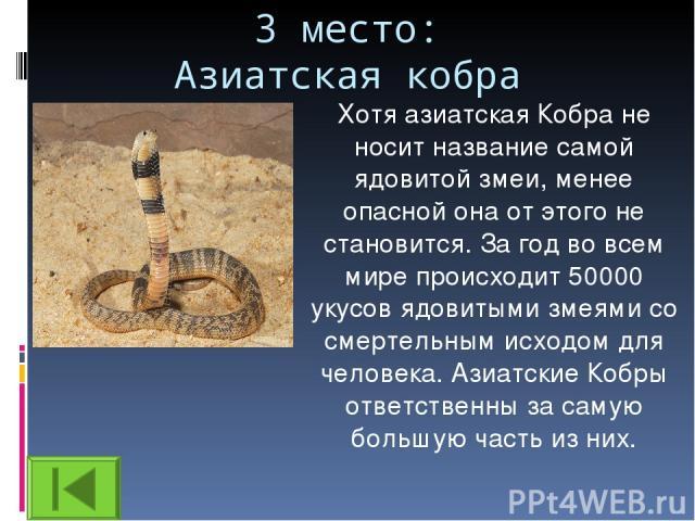 3 место: Азиатская кобра Хотя азиатская Кобра не носит название самой ядовитой змеи, менее опасной она от этого не становится. За год во всем мире происходит 50000 укусов ядовитыми змеями со смертельным исходом для человека. Азиатские Кобры ответств…