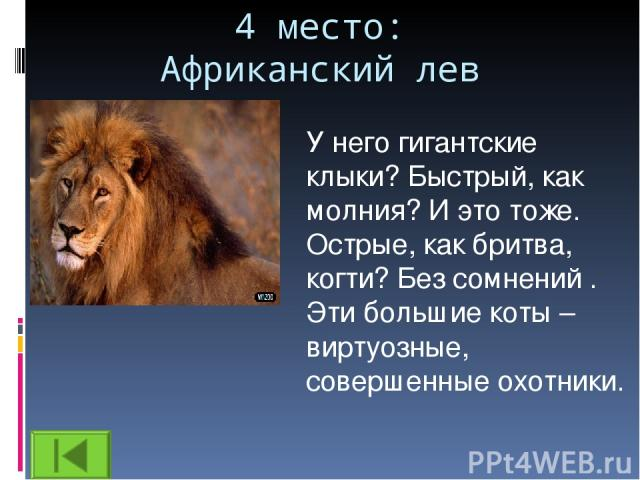 4 место: Африканский лев У него гигантские клыки? Быстрый, как молния? И это тоже. Острые, как бритва, когти? Без сомнений . Эти большие коты – виртуозные, совершенные охотники.
