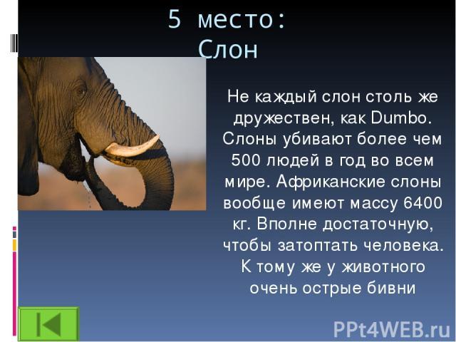 5 место: Слон Не каждый слон столь же дружествен, как Dumbo. Слоны убивают более чем 500 людей в год во всем мире. Африканские слоны вообще имеют массу 6400 кг. Вполне достаточную, чтобы затоптать человека. К тому же у животного очень острые бивни