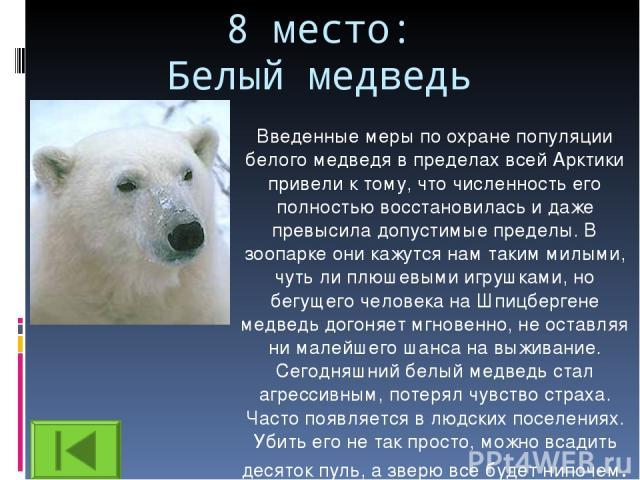 8 место: Белый медведь Введенные меры по охране популяции белого медведя в пределах всей Арктики привели к тому, что численность его полностью восстановилась и даже превысила допустимые пределы. В зоопарке они кажутся нам таким милыми, чуть ли плюше…
