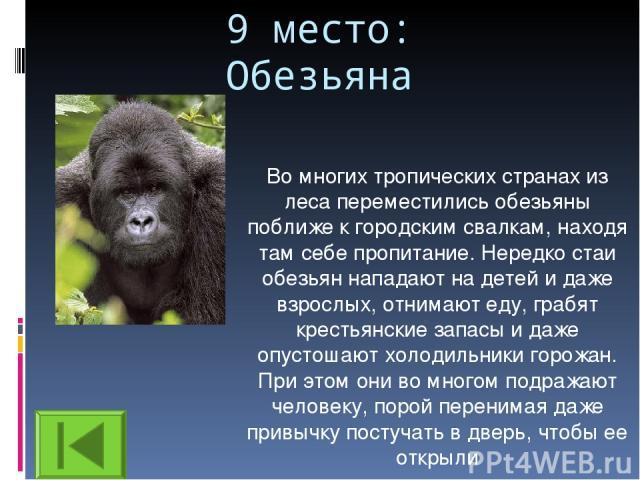 9 место: Обезьяна Во многих тропических странах из леса переместились обезьяны поближе к городским свалкам, находя там себе пропитание. Нередко стаи обезьян нападают на детей и даже взрослых, отнимают еду, грабят крестьянские запасы и даже опустошаю…