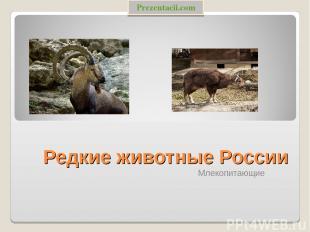 Редкие животные России Млекопитающие Prezentacii.com