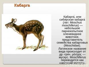 Кабарга Кабарга , или сиби рская кабарга (лат. Moschus moschiferus) — небольшое