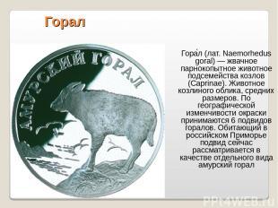 Горал Гора л (лат. Naemorhedus goral) — жвачное парнокопытное животное подсемейс