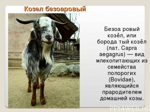 Козел безоаровый Безоа ровый козёл, или борода тый козёл (лат. Capra aegagrus) —