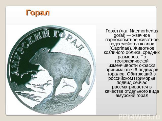 Горал Гора л (лат. Naemorhedus goral) — жвачное парнокопытное животное подсемейства козлов (Caprinae). Животное козлиного облика, средних размеров. По географической изменчивости окраски принимаются 6 подвидов горалов. Обитающий в российском Приморь…