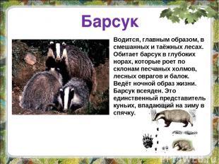 Барсук Водится, главным образом, в смешанных и таёжных лесах. Обитает барсук в г