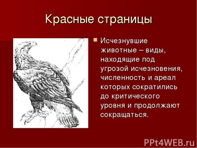 Красные страницы Исчезнувшие животные – виды, находящие под угрозой исчезновения, численность и ареал которых сократились до критического уровня и продолжают сокращаться.