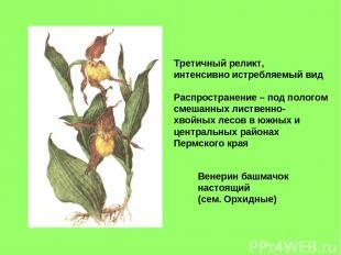 Венерин башмачок настоящий (сем. Орхидные) Третичный реликт, интенсивно истребля