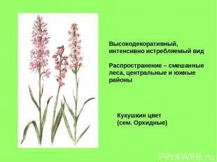 Кукушкин цвет (сем. Орхидные) Высокодекоративный, интенсивно истребляемый вид Ра