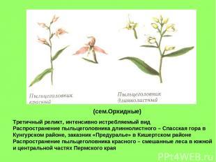(сем.Орхидные) Третичный реликт, интенсивно истребляемый вид Распространение пыл