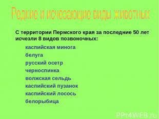 С территории Пермского края за последние 50 лет исчезли 8 видов позвоночных: кас
