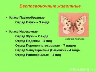 Класс Паукообразные Отряд Пауки – 3 вида Класс Насекомые Отряд Жуки – 2 вида Отр