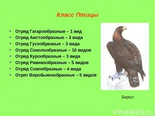 Класс Птицы Отряд Гагарообразные – 1 вид Отряд Аистообразные – 3 вида Отряд Гусе