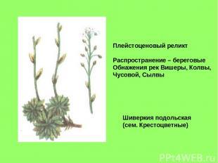 Шиверкия подольская (сем. Крестоцветные) Плейстоценовый реликт Распространение –