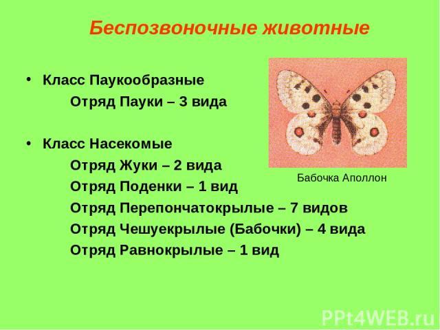 Класс Паукообразные Отряд Пауки – 3 вида Класс Насекомые Отряд Жуки – 2 вида Отряд Поденки – 1 вид Отряд Перепончатокрылые – 7 видов Отряд Чешуекрылые (Бабочки) – 4 вида Отряд Равнокрылые – 1 вид Беспозвоночные животные Бабочка Аполлон