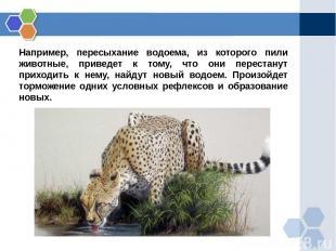 Например, пересыхание водоема, из которого пили животные, приведет к тому, что о