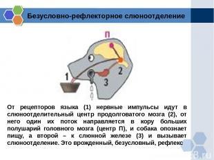 От рецепторов языка (1) нервные импульсы идут в слюноотделительный центр продолг