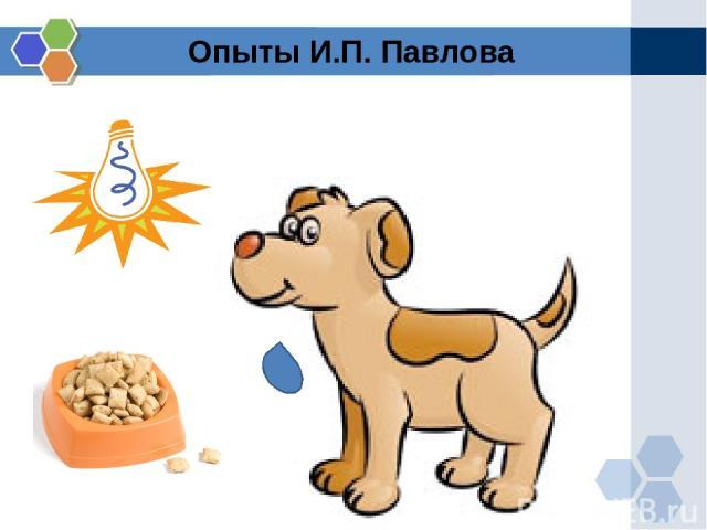 Опыты И.П. Павлова