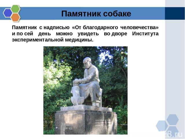 Памятник снадписью «Отблагодарного человечества» ипосей день можно увидеть водворе Института экспериментальной медицины. Памятник собаке