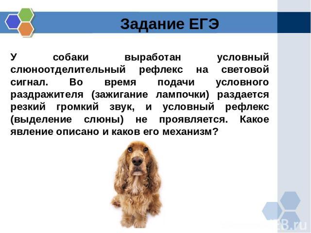 У собаки выработан условный слюноотделительный рефлекс на световой сигнал. Во время подачи условного раздражителя (зажигание лампочки) раздается резкий громкий звук, и условный рефлекс (выделение слюны) не проявляется. Какое явление описано и каков …
