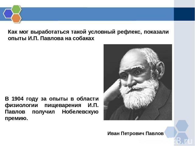 Как мог выработаться такой условный рефлекс, показали опыты И.П. Павлова на собаках Иван Петрович Павлов В 1904 году за опыты в области физиологии пищеварения И.П. Павлов получил Нобелевскую премию.