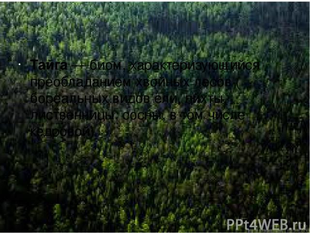 Тайга Тайга —биом, характеризующийся преобладанием хвойныхлесов(бореальныхвидовели,пихты,лиственницы,сосны, в том числекедровой).